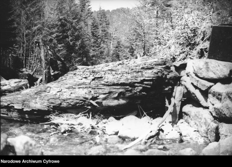 Obiekt Fragment lasu. z jednostki Wisła