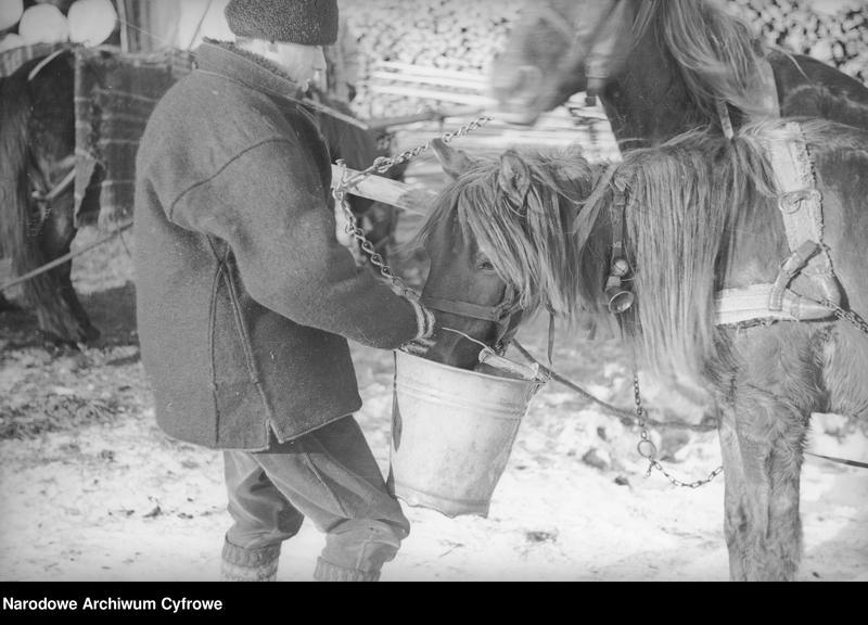 Obiekt Hucuł karmiący konie. z jednostki Huculskie typy ludowe