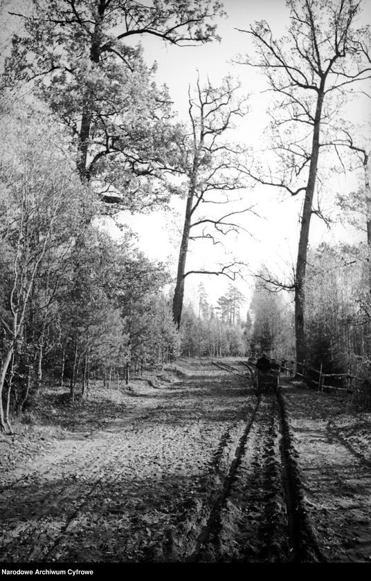 Obiekt Droga przez las. Wóz konny. z jednostki Białowieża