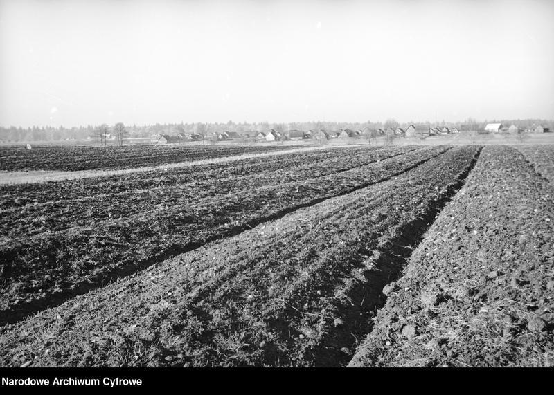 Obiekt Pola uprawne. W oddali widok wioski. z jednostki Białowieża