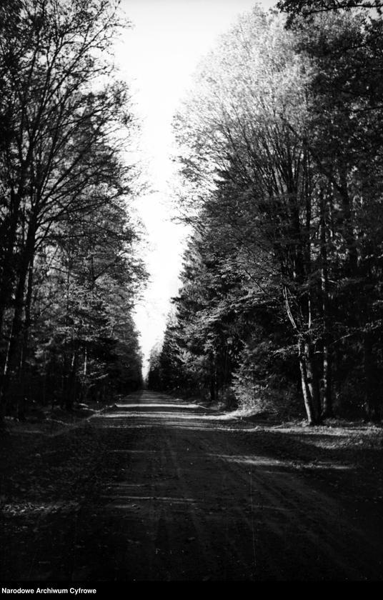 Obiekt Droga przez las. z jednostki Białowieża