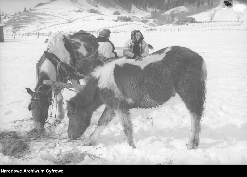Obiekt Hucułki przy koniach. z jednostki Huculskie typy ludowe