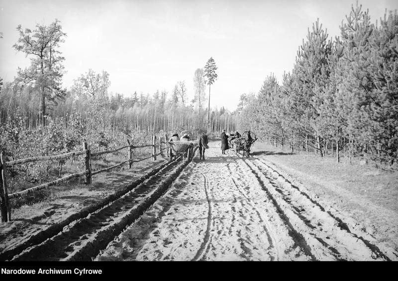 Obiekt Polesie. Wozy konne na piaszczystej drodze w lesie. z jednostki Białowieża
