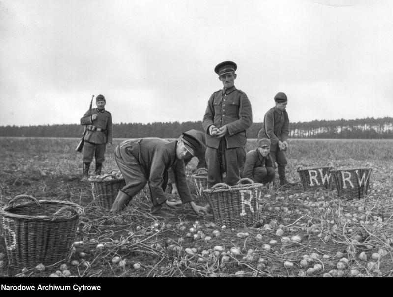 """Obraz 2 z jednostki """"Polscy jeńcy przy zbieraniu ziemniaków"""""""