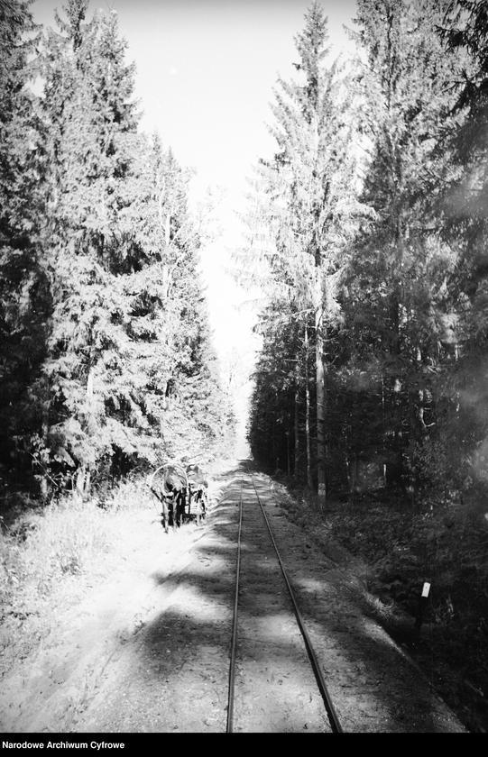 Obiekt Tory kolejowe przez las. z jednostki Białowieża