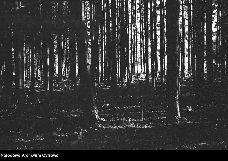 Obiekt Fragment lasu. Widoczne pnie drzew. z jednostki Białowieża