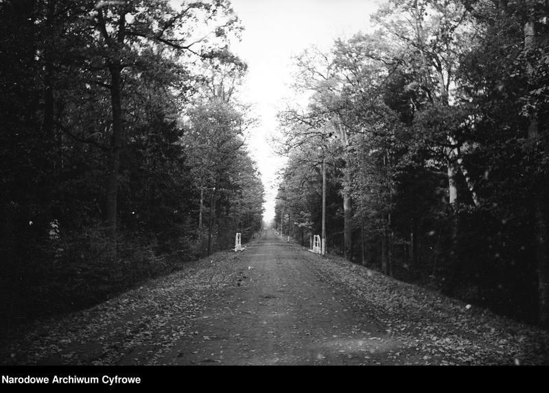 Obiekt Droga przez las. Widoczny ozdobny biały mostek przy drodze. z jednostki Białowieża