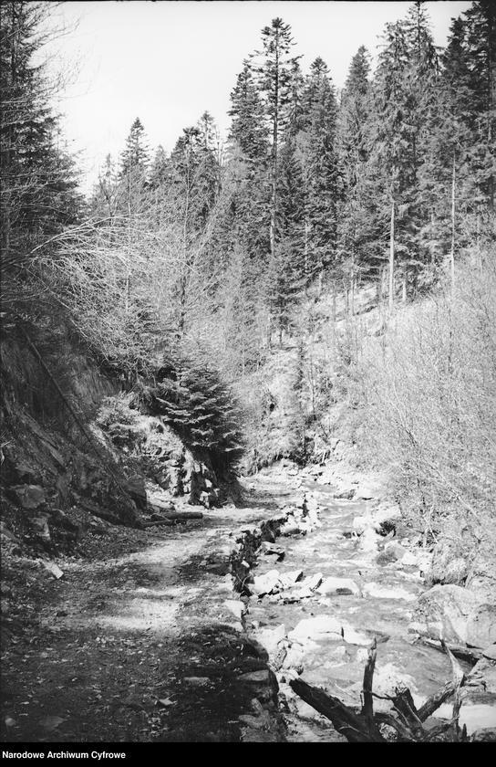 Obiekt Potok górski w lesie. z jednostki Wisła