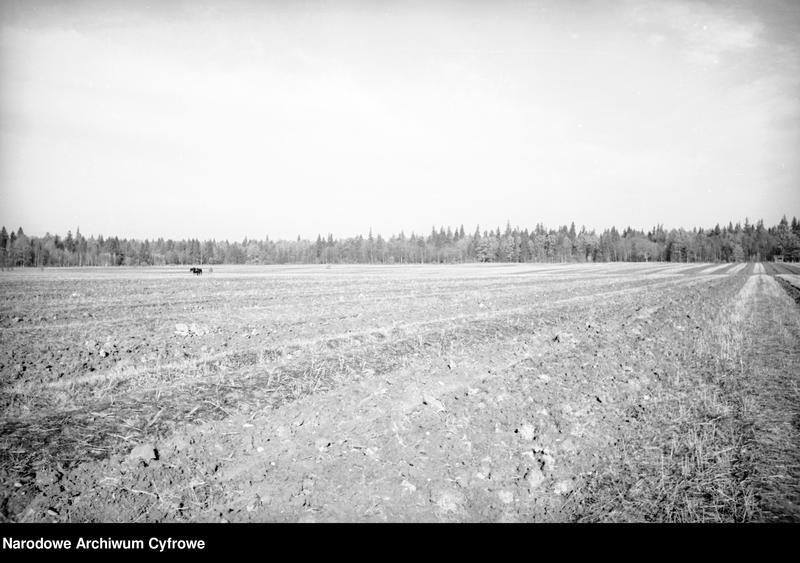 Obiekt Widok na pole orne. W oddali las z jednostki Białowieża