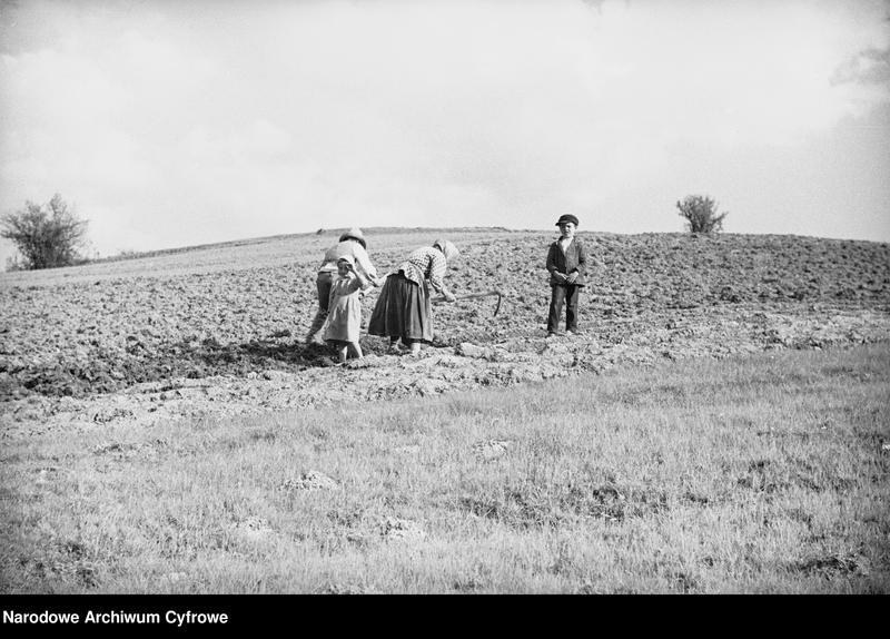Obiekt Rodzina rolnicza podczas pracy na roli. z jednostki Wisła