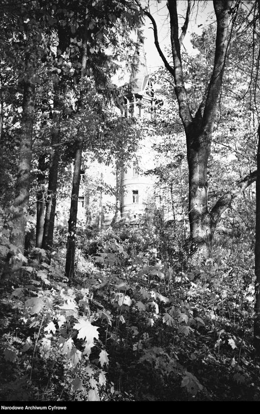 Obiekt Fragment zarośli w parku. W tle widoczna wieża pałacu. z jednostki Białowieża
