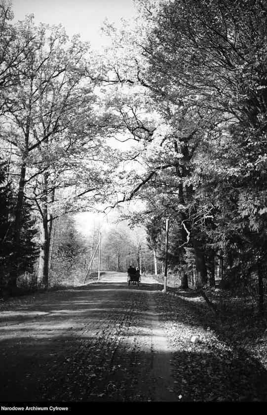 Obiekt Wóz konny na drodze prowadzącej przez las. z jednostki Białowieża