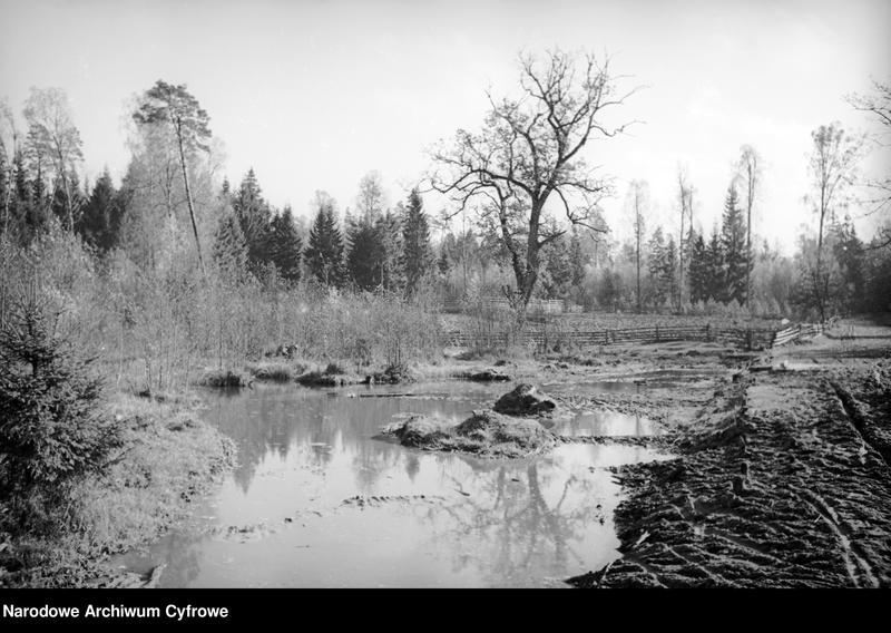 Obiekt Bagna na skraju lasu. z jednostki Białowieża