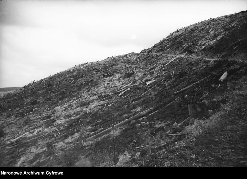 Obiekt Widok połamanych drzew. z jednostki Wisła
