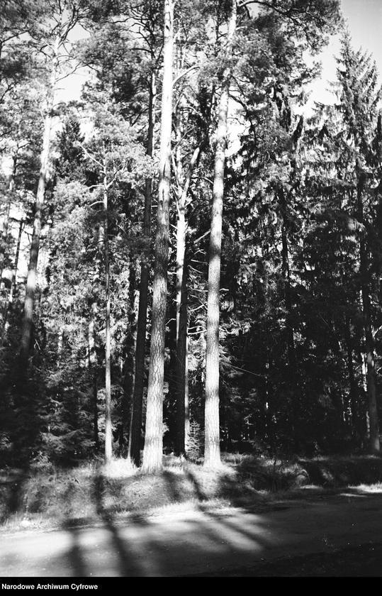 Obiekt Fragment lasu iglastego. Droga przed lasem. z jednostki Białowieża