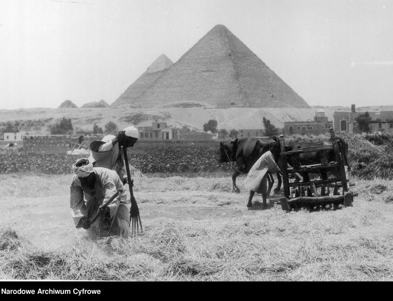 "Obraz 16 z kolekcji ""Kierunek Egipt!"""