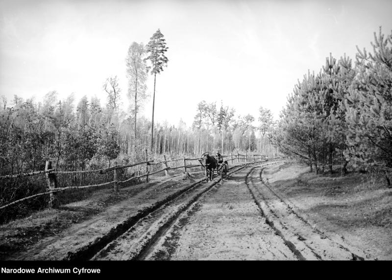 Obiekt Polesie. Wóz konny na leśnej drodze. z jednostki Białowieża