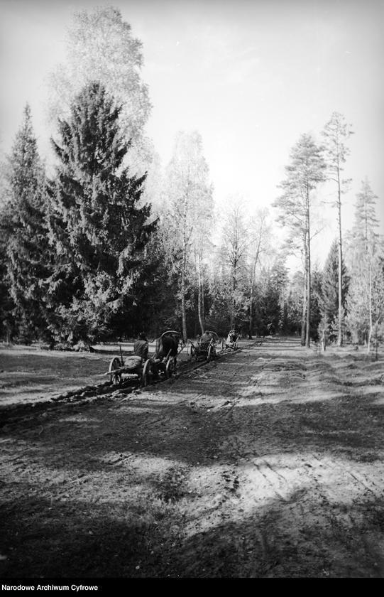 Obiekt Wozy konne na leśnej drodze. z jednostki Białowieża