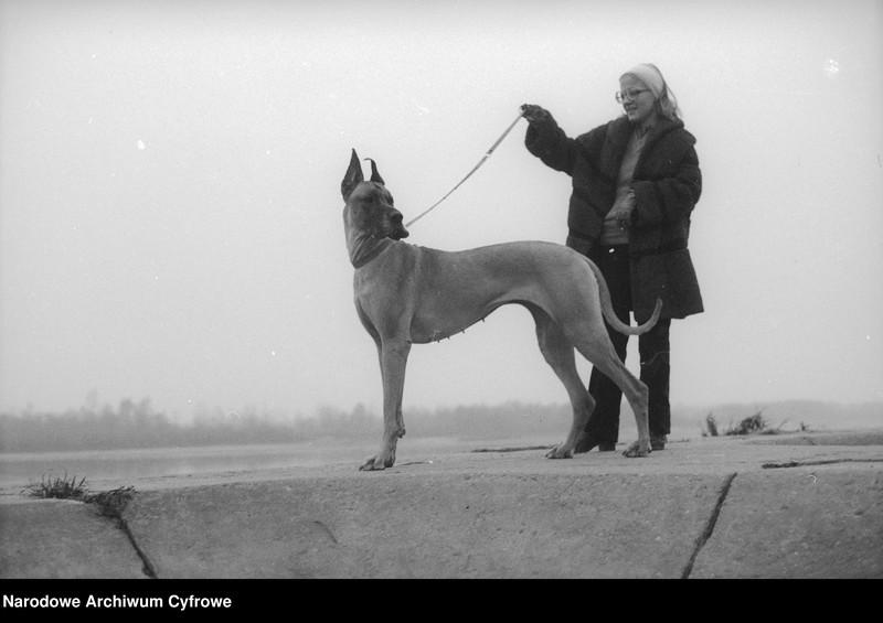 """image.from.unit """"Kobieta z psem rasy dog niemiecki. Zabawy psów w Warszawie nad Wisłą"""""""