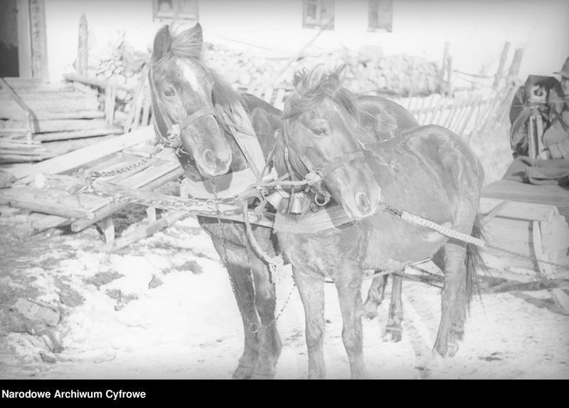 Obiekt Konie zaprzężone do sań w huculskiej wsi. z jednostki Huculskie typy ludowe